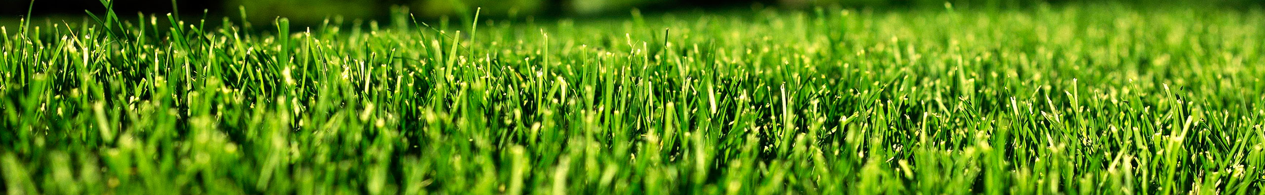 evolution of synthetic turf The newest synthetic turf products have been chemically treated to be resistant   history in the early 1950s, the tufting process was invented a large number of.