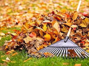 Autumn Grass Care