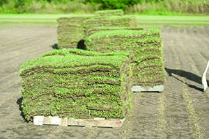 Turf Varieties - Which is best for you?