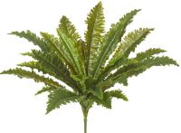 Asplenium Birds Nest Fern Faux