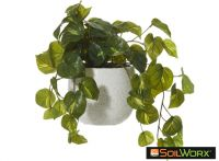 Pothos Hanging in Tub Pot