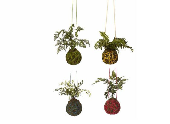 Hanging Fern Ball